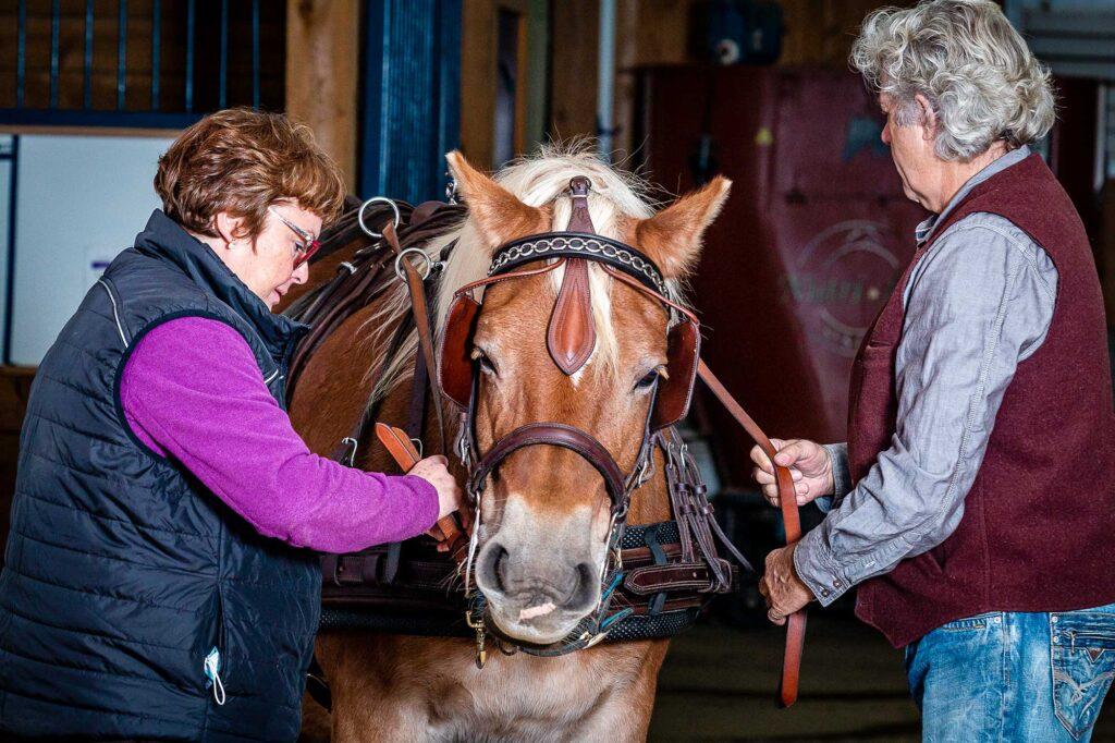 Une femme un homme attelant leur cheval